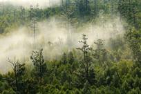晨雾迷漫的森林