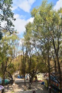 公园树木风景