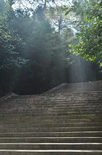 光照山林阶梯