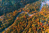 航拍长白山秋季森林河湾风景