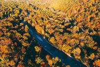 航拍长白山树林秋色