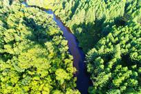 航拍森林河流风景
