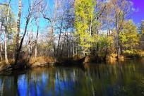 河岸五彩林