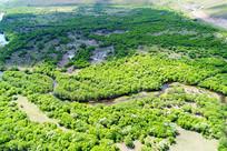 呼伦贝尔林区丛林河湾