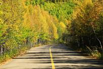 金秋彩林公路风景