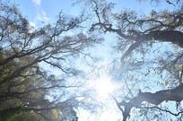 蓝天树木风景