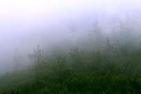 梦幻林海云雾