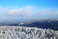 雪域树林景观