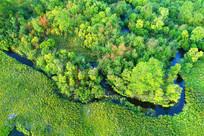 大兴安岭林区五彩林小溪