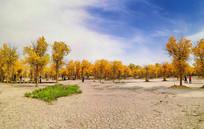 额济纳胡杨林巨幅风景