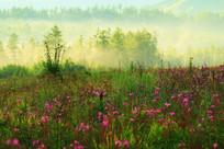 花丛树林晨雾迷漫