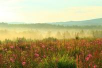 花丛树林雾景