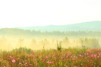花丛树林雾气升腾