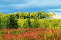 绿色林海山花盛开