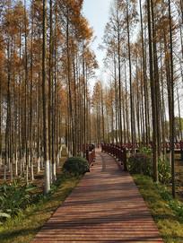 水杉林木栈道