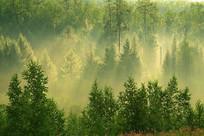 树林阳光雾气风景
