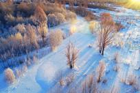 晨雾朝阳 中的冰河丛林