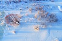 雪域冰封河流树林晨光