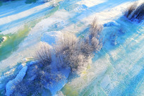 雪域冰河丛林