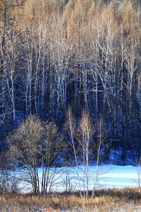 大兴安岭冬季树林风景