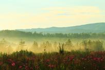 花丛树林之雾