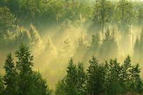 树林阳光雾气