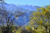 高山绿树风景