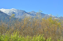 高山野草风景