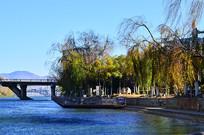 湖泊树木风景