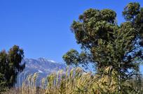 蓝天高山绿树风景