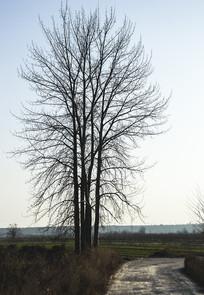 农村田园旁边的大树