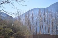 高山树木风景