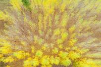 航拍秋日原野树林