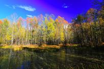 河流树林秋色