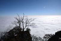 彭州铁瓦殿半山枯树和云海