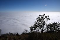 彭州铁瓦殿云海和杜鹃树