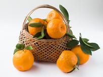 采摘的新鲜水果椪柑