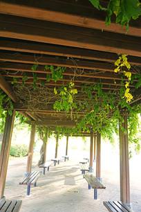 公园的露天绿廊廊架内景
