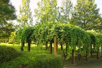 韩国水原城市公园的露天绿廊