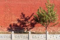 红色的墙和一棵树