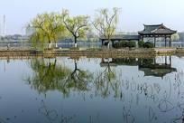 大明湖一角