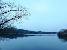 蓝色湖泊和枯树