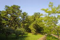 韩国孝园公园林荫中的步行道