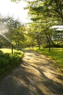 韩国孝园公园林荫中的健身道
