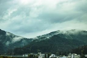 下雨之前的树林