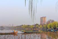 大明湖一隅