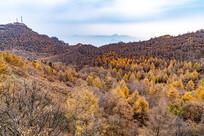金黄色的森林