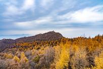 秋季金黄色的森林
