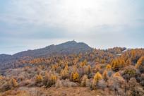 秋天的森林