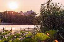 大明湖日落